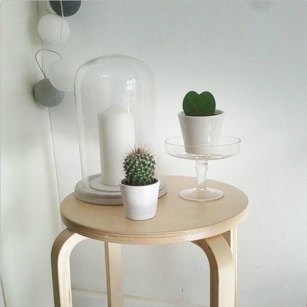 decorar plantas Cactus