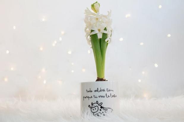decorar-plantas-bulbo