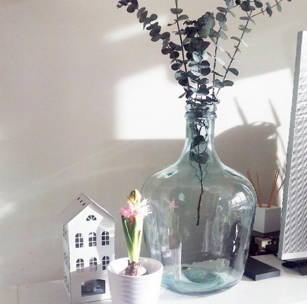 decorar-plantas-bulbos-jacintos