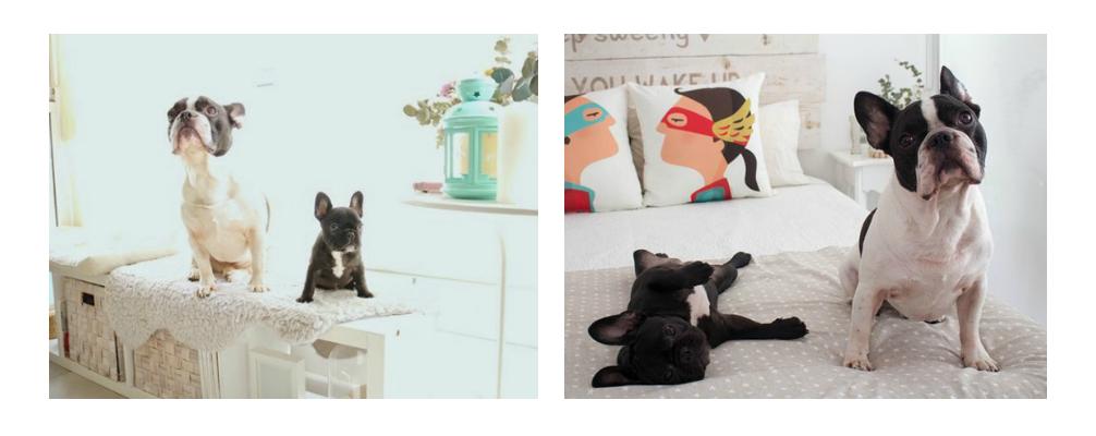 decoración-mascotas-destacado