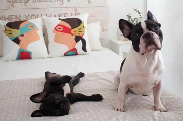 decoración-mascotas-dormitorio