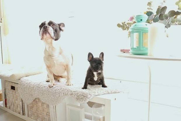 decoración-mascotas-salon