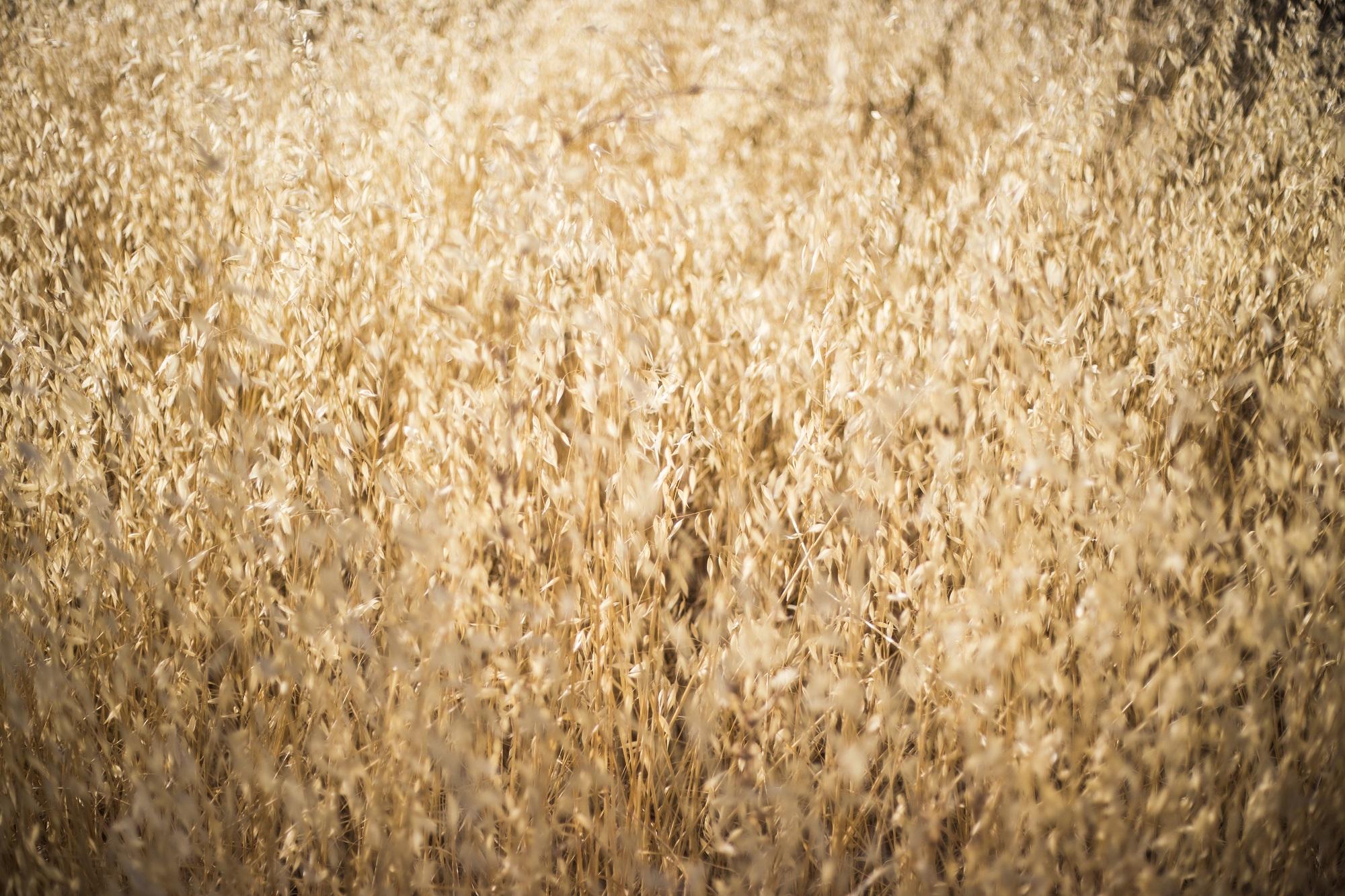 nacho uve fotografiar campo