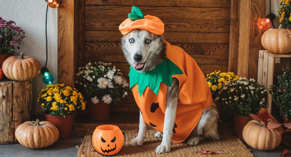 disfraz halloween mascota