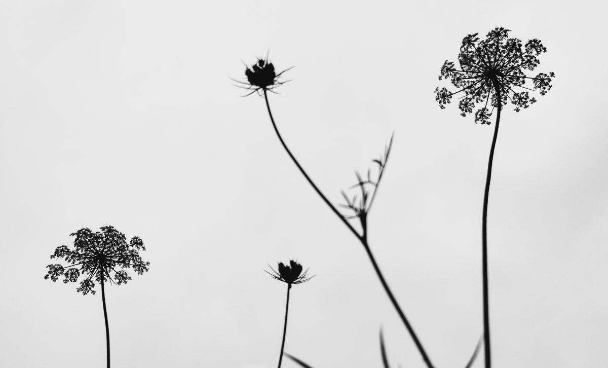 como fotografiar flores 28