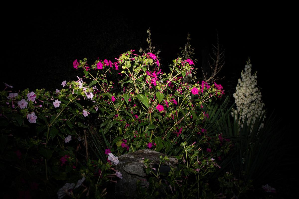 como fotografiar flores 18