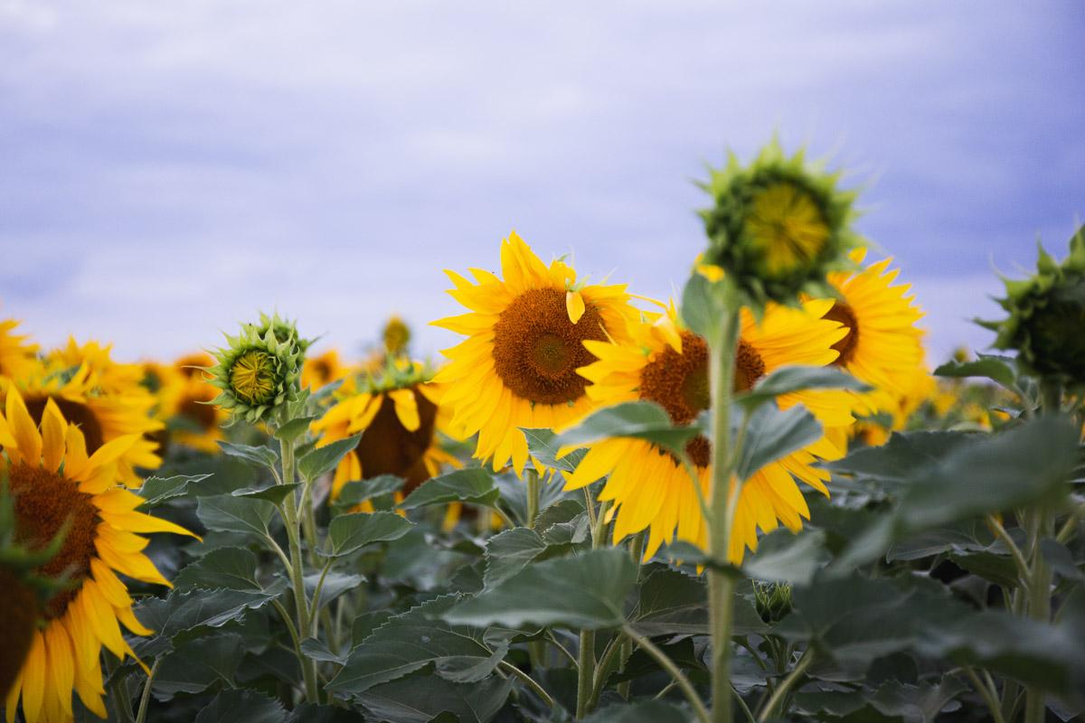 como fotografiar flores 16