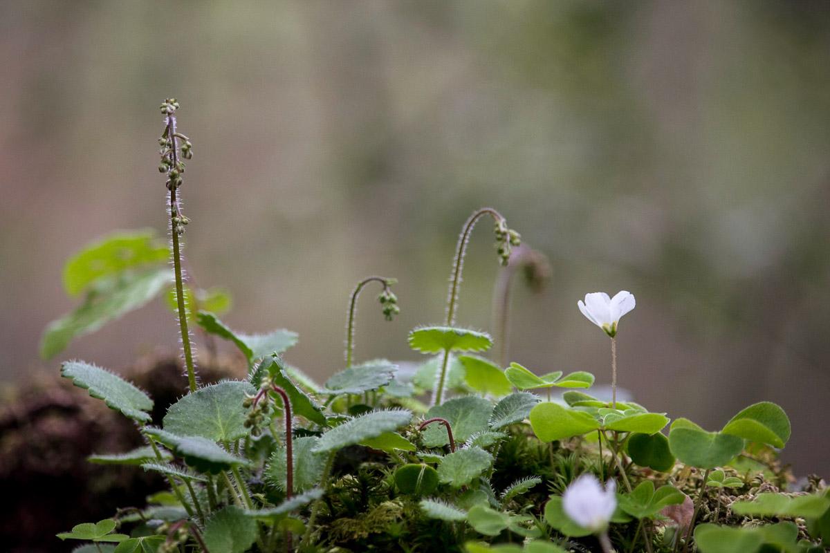 como fotografiar flores 15
