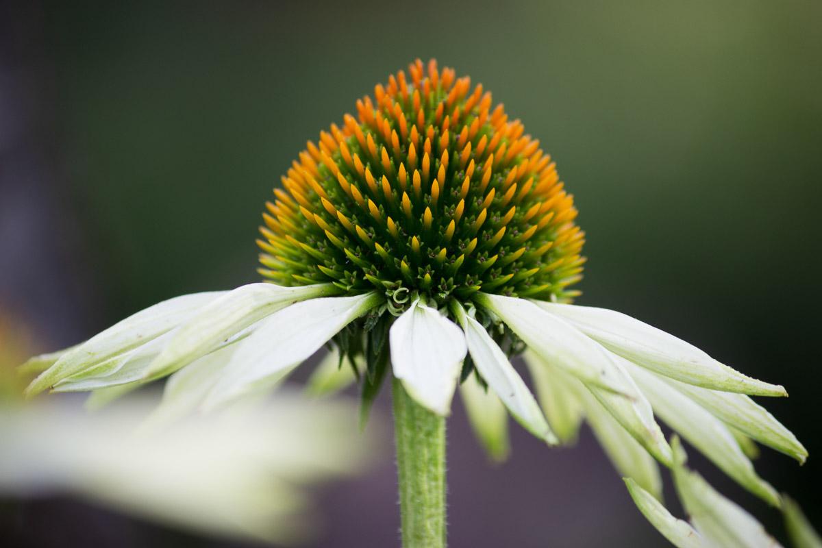 como fotografiar flores 13