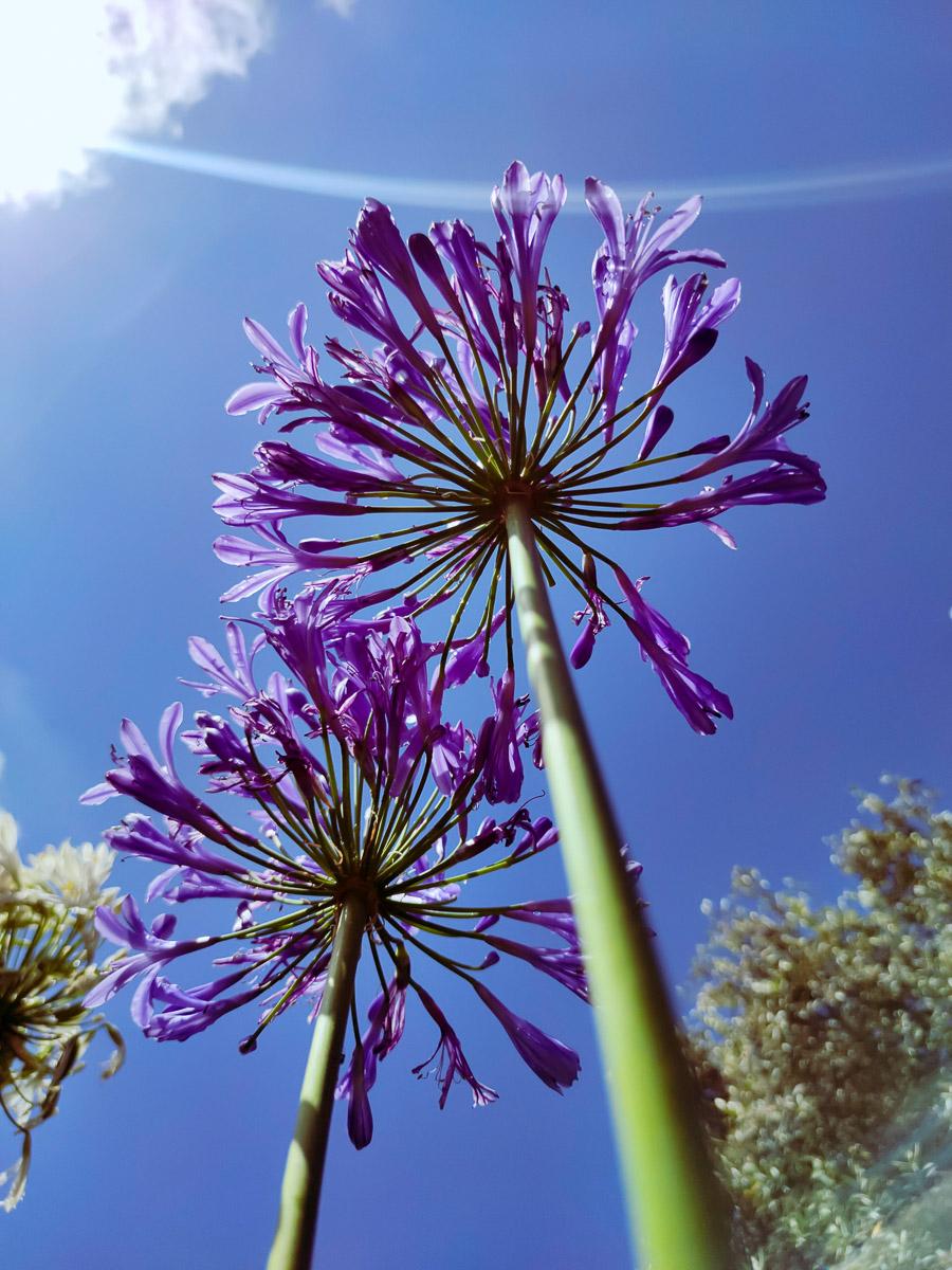 como fotografiar flores 27