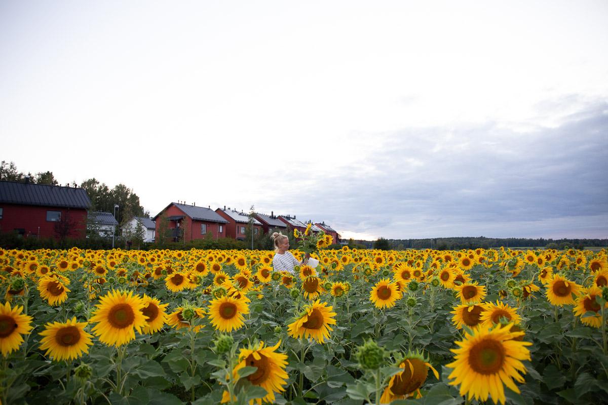 como fotografiar flores 9