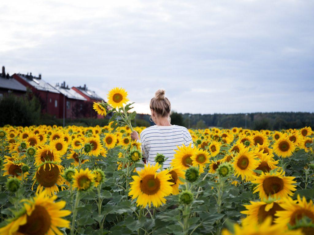 como fotografiar flores 8