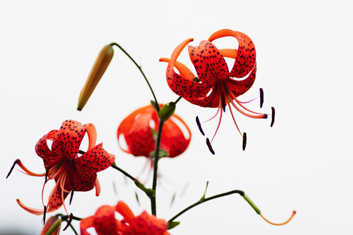 como fotografiar flores 5