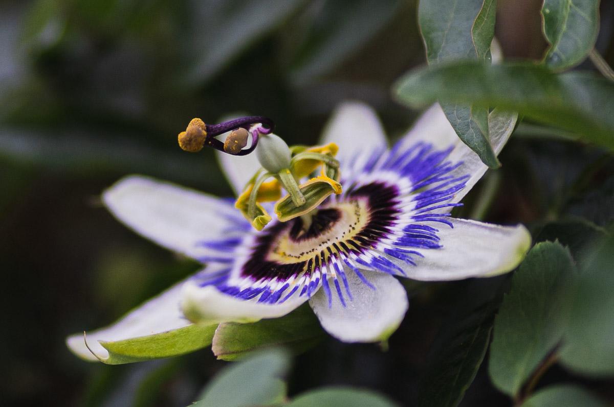 como fotografiar flores 1