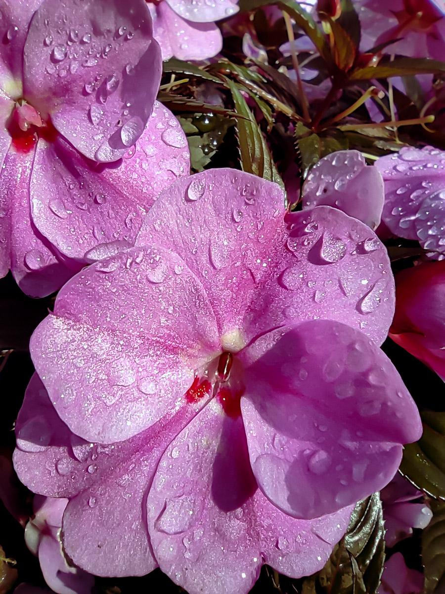como fotografiar flores 26