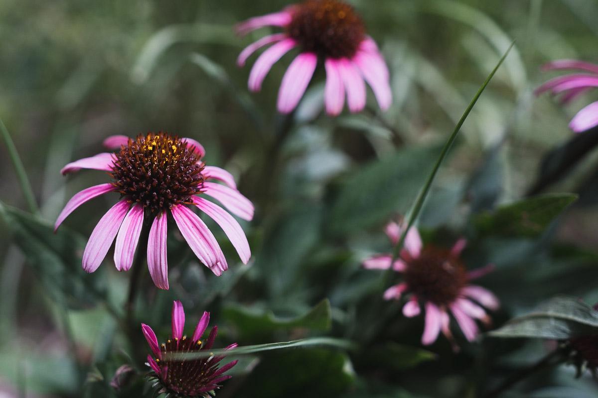 como fotografiar flores 24