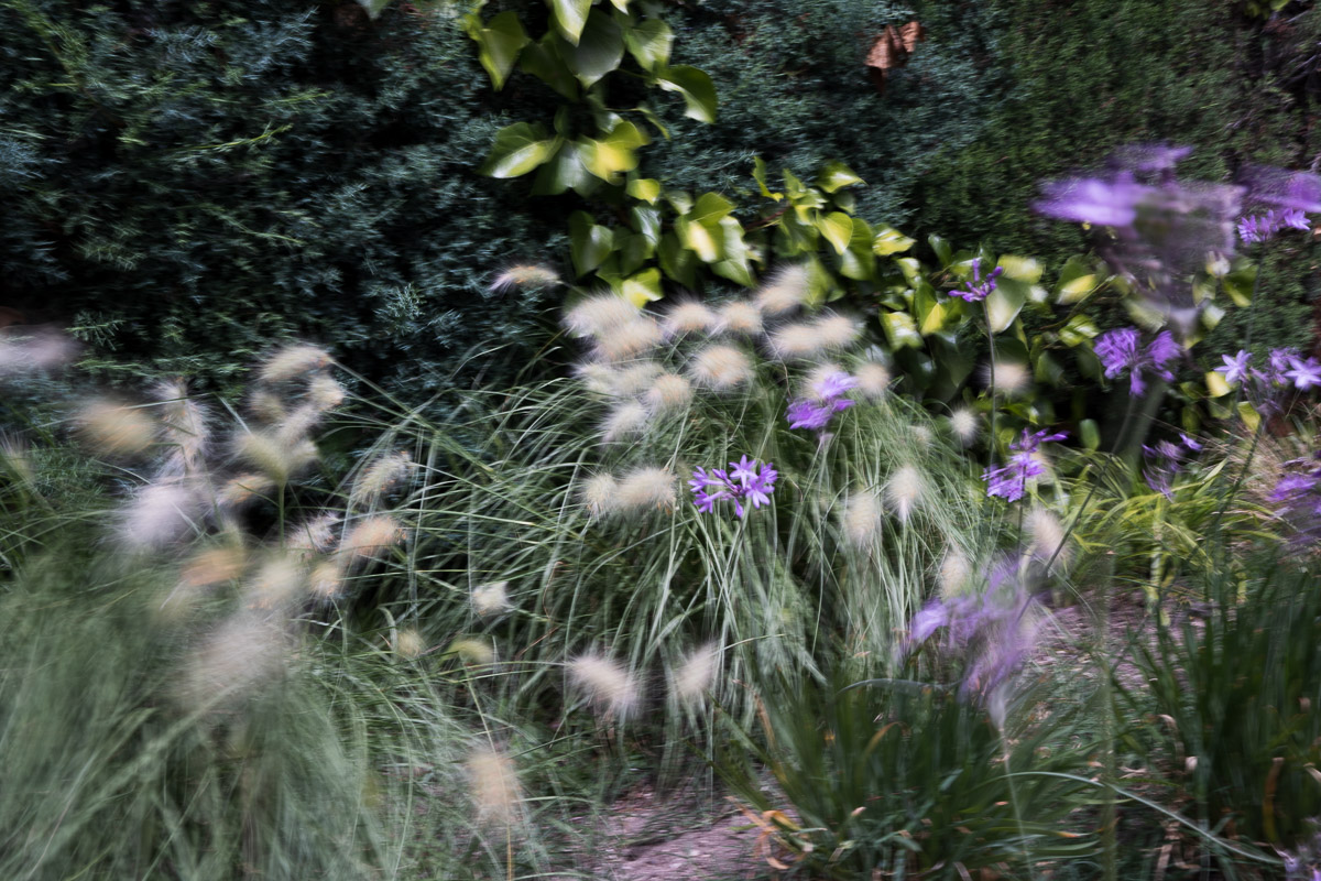 como fotografiar flores 23