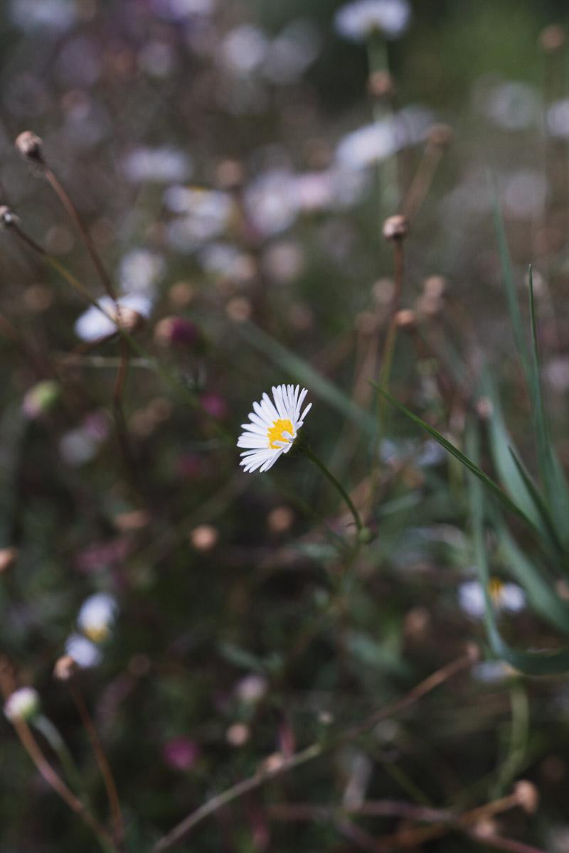 como fotografiar flores 22