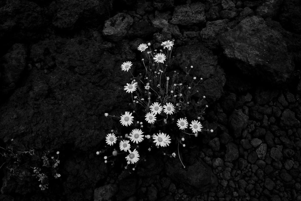 como fotografiar flores 20